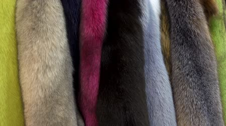 mink : Row of mink furs of bright colors as a background. Hdvideo