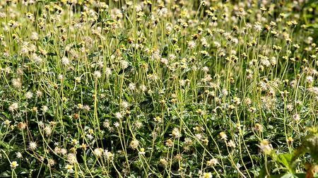 grass moving in wind Stok Video
