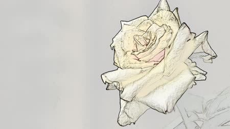 Rose in drawing Stok Video