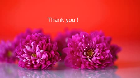 sayesinde : bouquet of beautiful chrysanthemums on a red background Stok Video