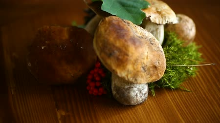 торф : white forest natural mushrooms on a wooden table Стоковые видеозаписи