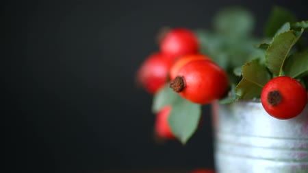 rosehip : Ripe red briar berries on a branch on a black background