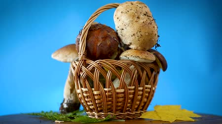 boletus edulis : forest fresh natural mushrooms boletus on a blue
