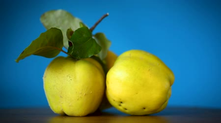 kraliçe : ripe fruit quince isolated on blue background Stok Video