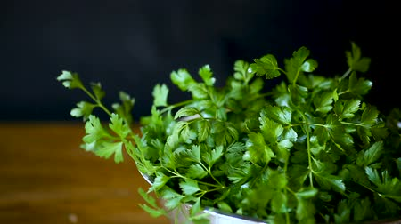 kolendra : fresh green parsley isolated on the black background. Wideo