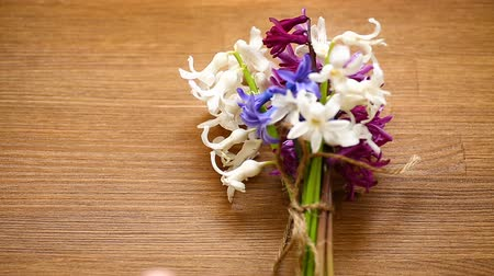 seu : spring beautiful flowers of hyacinth with congratulations for mom