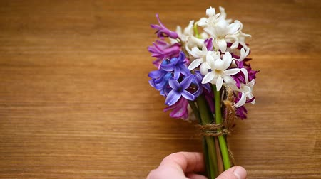 hiacynt : spring beautiful different color flowers of hyacinth Wideo
