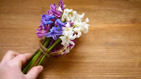 sayesinde : spring beautiful different color flowers of hyacinth Stok Video