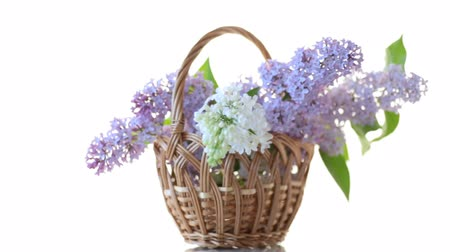 открытка : spring blooming bouquet of lilac isolated on white
