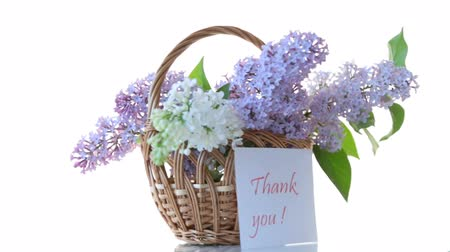 seu : spring blooming bouquet of lilac isolated on white