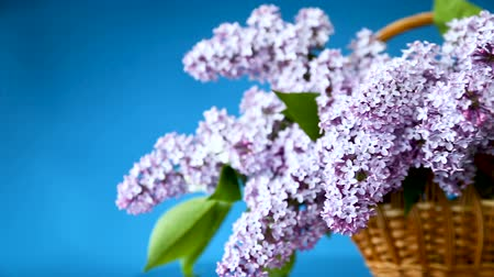 открытка : spring blooming bouquet of lilac in a basket