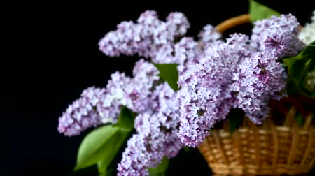 suíça : spring blooming bouquet of lilac in a basket
