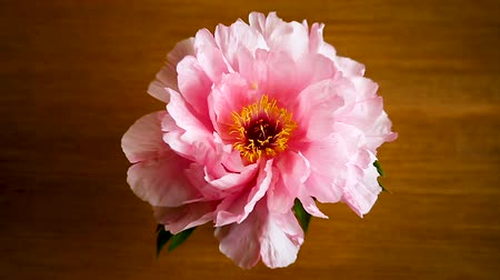 открытка : Pink Peony flower ,Paeonia suffruticosa, isolated on on a wooden