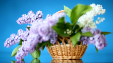 suíça : spring blooming bouquet of lilac in a basket on a blue background