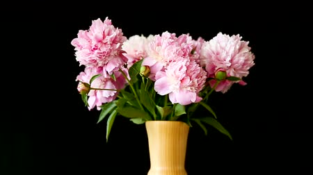 piwonie : bouquet of blooming peonies isolated on black background