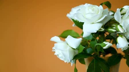 vaas : bouquet of beautiful white roses on a orange