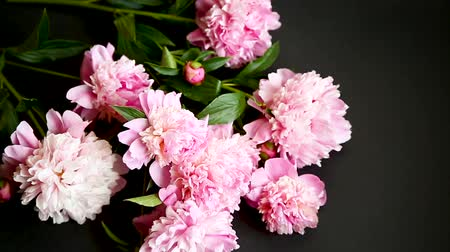 piwonie : bouquet of blooming peonies on black background