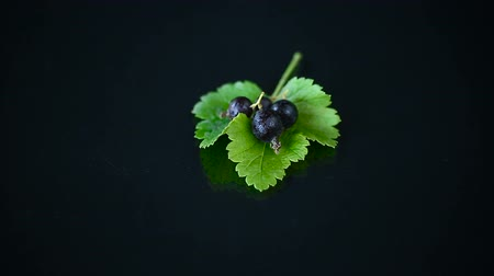 смородина : ripe black currant with foliage on black background