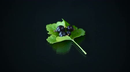 ripe black currant with foliage on black background