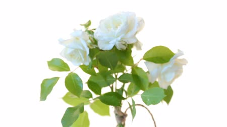 bouquet of beautiful white roses isolated on white