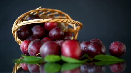 organic red ripe cherry plum isolated on black Wideo