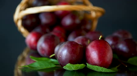 organic red ripe cherry plum isolated on black Stok Video