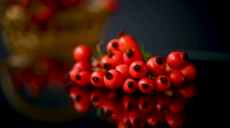 rosehip : red ripe rosehip berries on a black