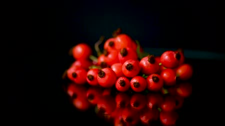 briar : red ripe rosehip berries on a black