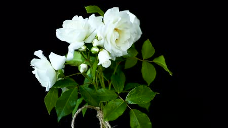 открытка : bouquet of beautiful white roses on a black