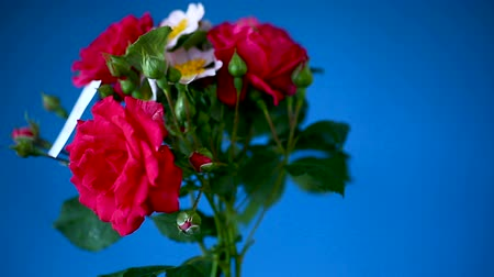 sayesinde : bouquet of beautiful red roses on a blue