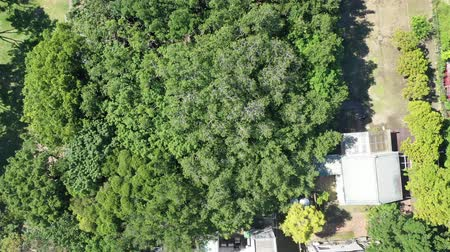 banyan : Aerial footage of Anping Tree House,Tainan, Taiwan. Stock Footage
