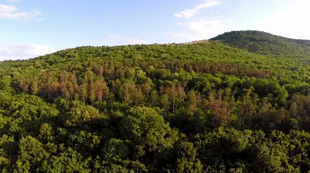 oak forest : Balkan mixed forest, aerial view