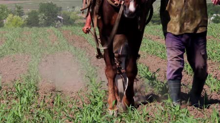 plowman : Horse pulling old plow Stock Footage