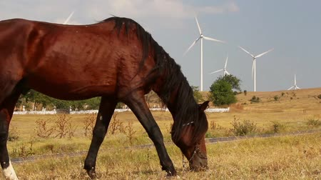 cavalinho : Grazing horse with turbines in the background