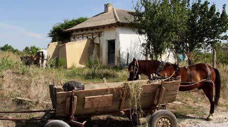 feed on : Horse and cart with a house in the background.The house is in a poor condition.