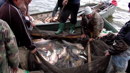 fishing industry : Traditional fishing in Danube Delta