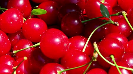 savanyú : Freshly picked sour cherries closeup
