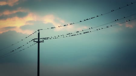 птица : Birds on the wires