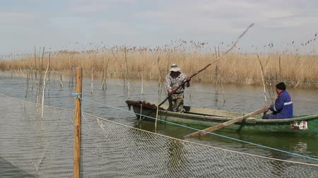 zander : Danube Delta, Romania - 16 April 2015: Repopulation of lake Razelm with pikeperch fertilized eggs.