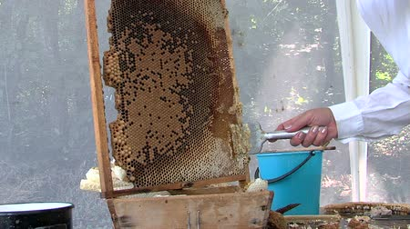 королева : Beekeeper preparing the frame for extraction of honey