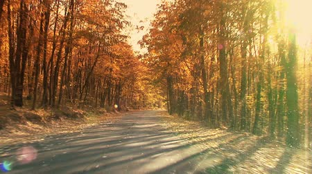 řídit : Fall in the forest. Steady footage shot from the car with grad sunset filter.