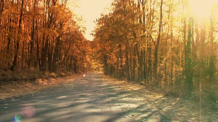 asphalt road : Fall in the forest. Steady footage shot from the car with grad sunset filter.