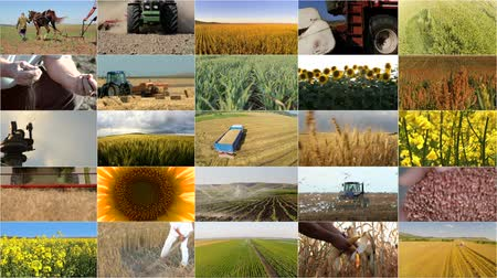 plowman : Montage selection of different crops and agricultural work