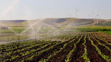 irrigação : Sprinkler irrigation with turbines in the background