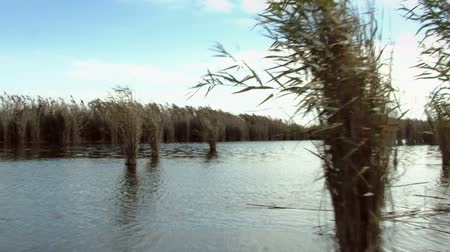 vizes élőhelyek : Endless expanses of water and reeds in the Danube Delta