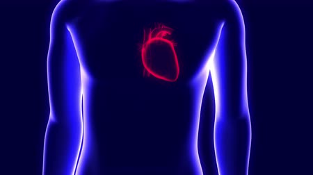 infarct : 3D animation of a human hologram and a beating heart Stock Footage