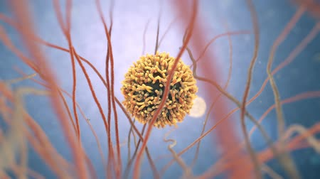 antibody : 3d animation of white blood cells also called leukocytes or leucocytes Stock Footage