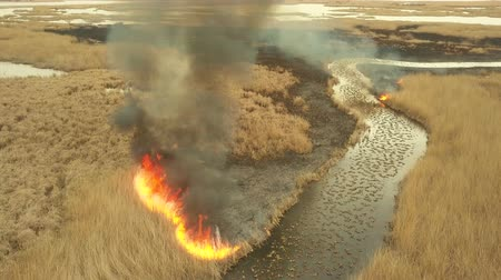 kamış : Vegetation fire in the Danube Delta, aerial view Stok Video