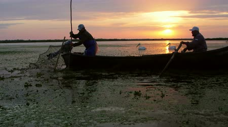catástrofe : Danube Delta, Romania - June 16, 2019: Fishermen checking nets at dawn in Danube Delta Stock Footage