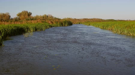 söğüt : Danube Delta wetlands in motion